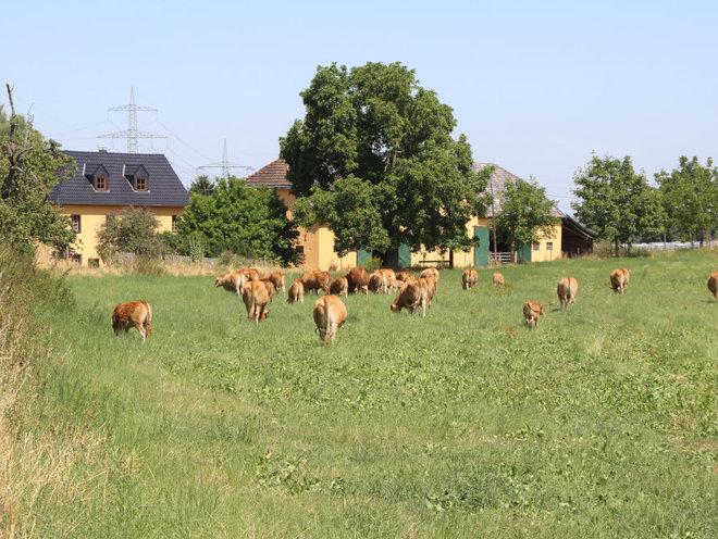 Burg Ramelshoven